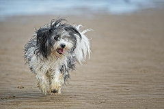 Andy-Williams-Dog-on-Colwyn-Bay-Beach